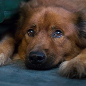 Dexter Pet Sitting in Gainesville FL