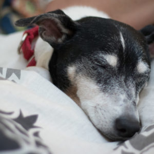 Dog Sleeping | Gainesville Pet Sitting