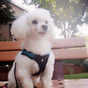 Gainesville Pet Sitting Teddy