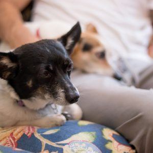 Pet Taxi | Gainesville Pet Sitting